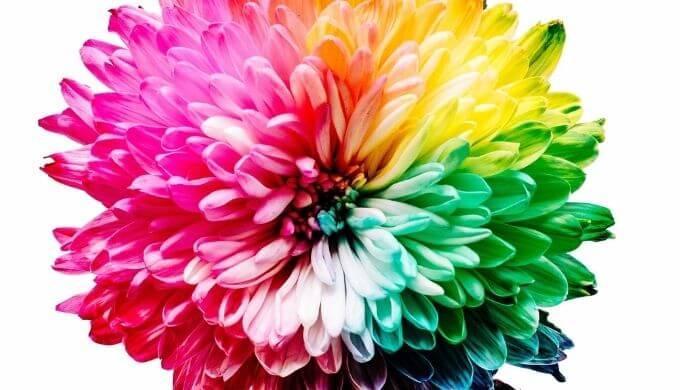 お花の写真2
